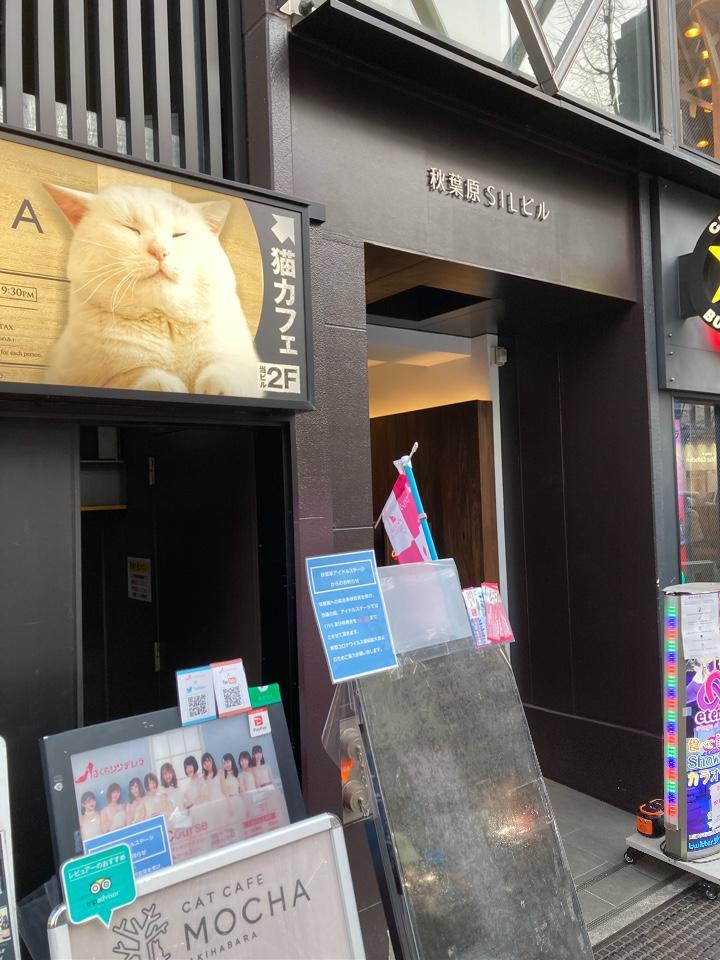 猫カフェ MOCHA秋葉原店の口コミ